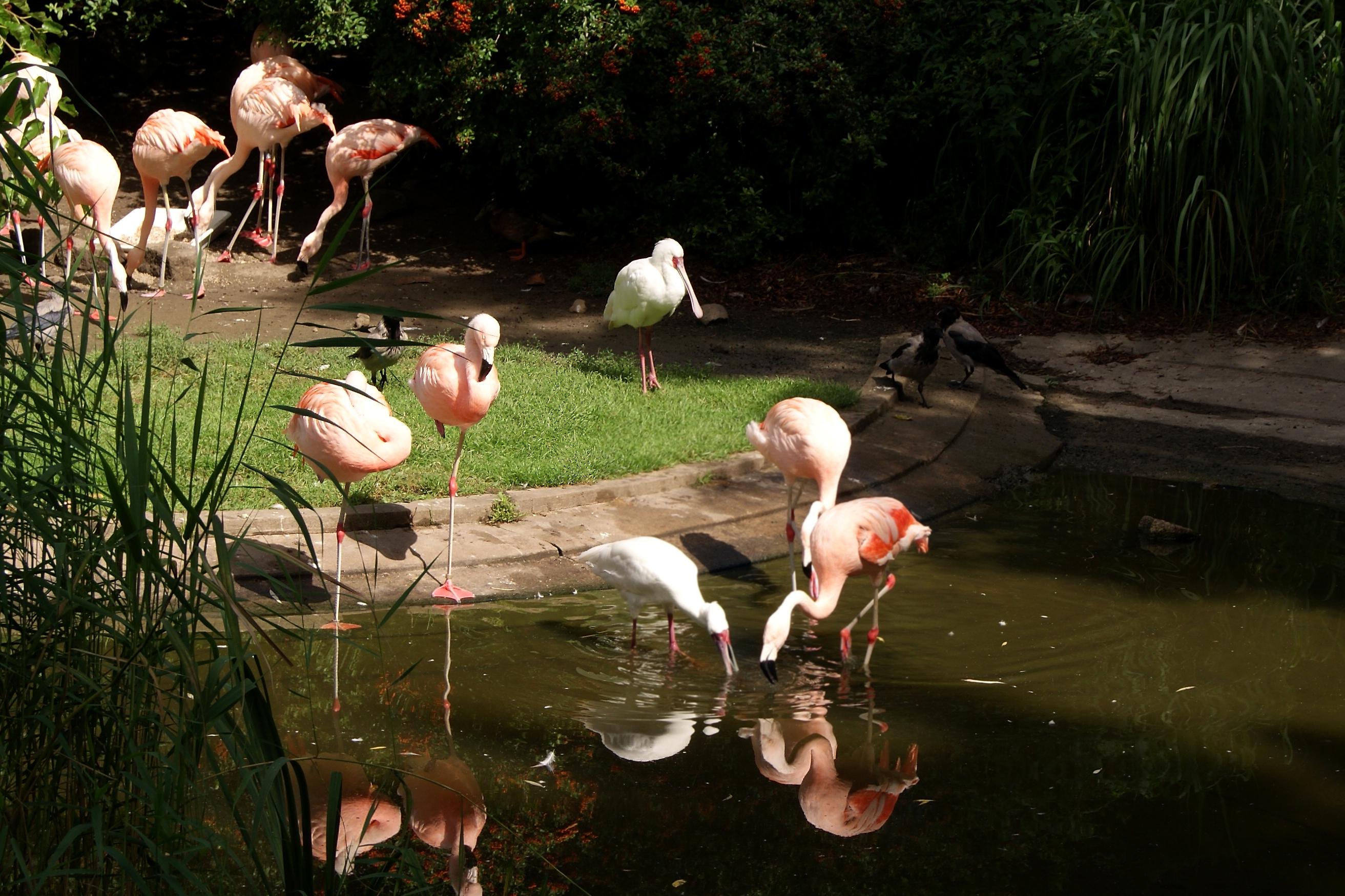 Flamingofaza