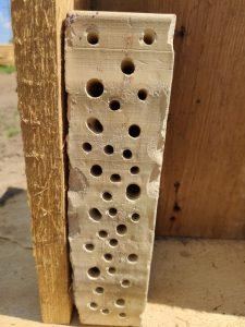 Cegła z dziurami w sam raz dla pszczół samotnic